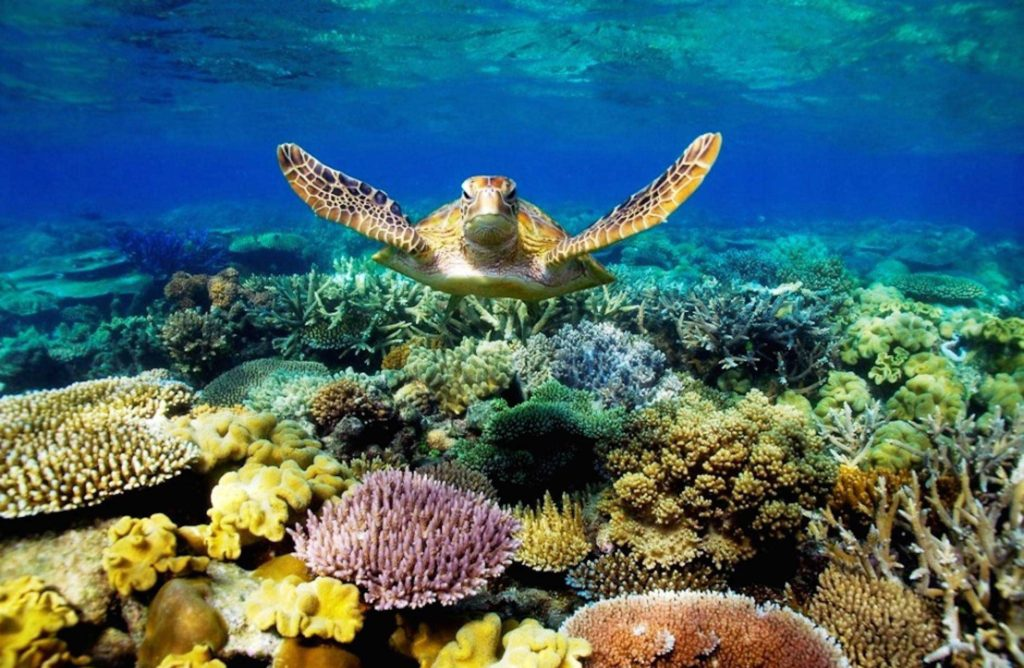 Rùa Vích Côn Đảo
